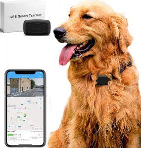 GPS parra perro tamaño mini