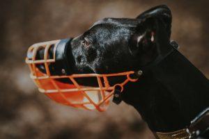 Bozal para perro tipo cesta