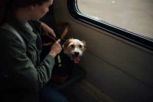Trasportín para perros