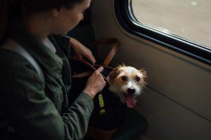 Trasportín perro pequeño