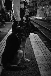 Perro viaje en tren con correa y bozal