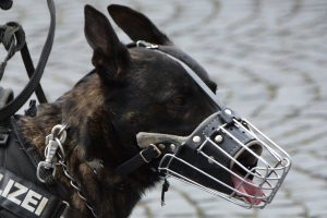 Bozal de perro de rejilla metálica