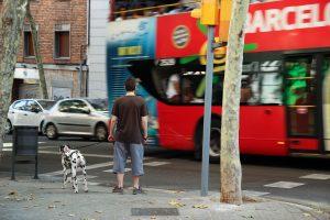 Paseo perro con correa