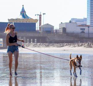 Perro con correa larga