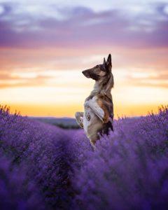 Fotografía de Perro paisaje hermoso. Emilio Cuenca