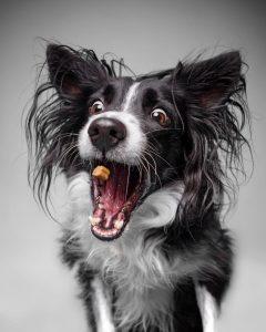 Perro comiendo chuche. Emilio Cuenca