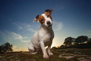Perro en paisaje aire libre. Foto: Emilio Cuenca