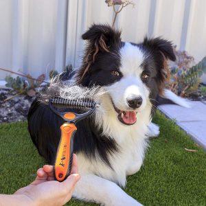 Cepillo tipo rastrillo para perros de perro largo. Belle&blu