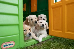 Casa para perros de plastico